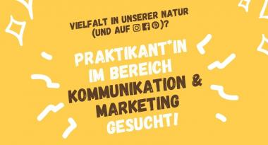 nearBees Praktikum im Bereich Kommunikation & Marketing